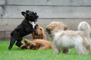 playing-puppies-790638_1280