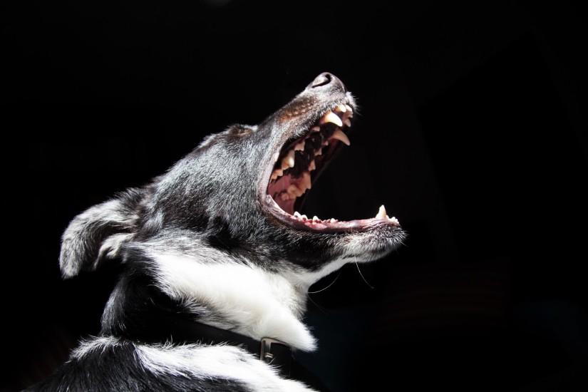Prolong Their Life – Pet DentalCare